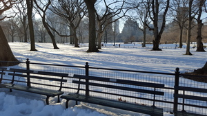 Snowy Central Park in the Sun